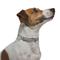 FORESTO Ошейник против клещей и блох для собак мелких пород, 38 см