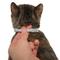 FORESTO Ошейник против клещей и блох для кошек, 38 см
