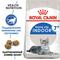 ROYAL CANIN корм для кошек Indoor +7 (0.4 кг)